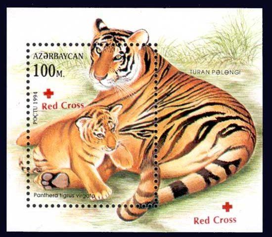 Tygrys kaspijski z lenkorańskich lasów