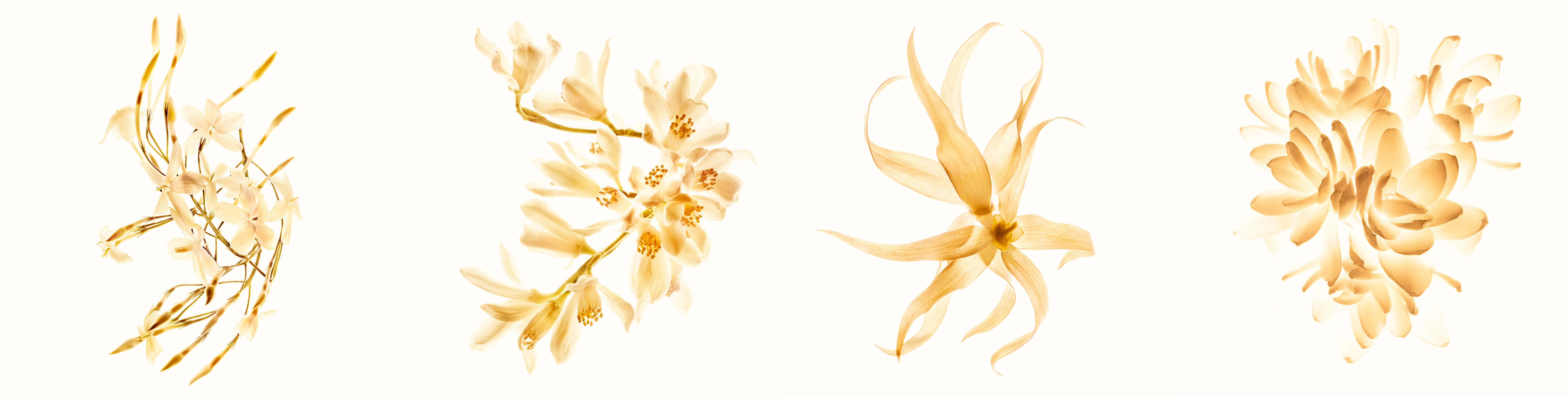 Kwiaty w perfumach Chanel