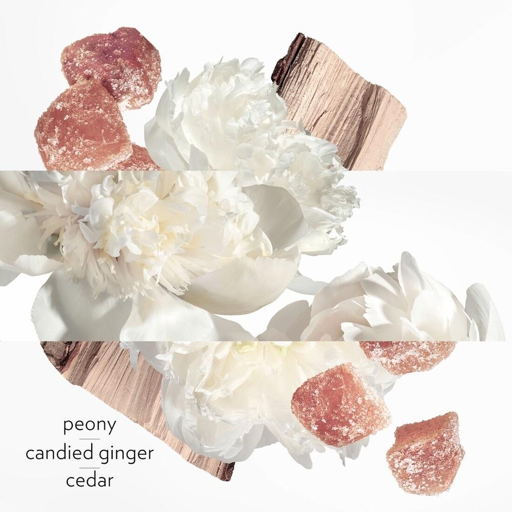 nuty perfum Twilly Eau Ginger